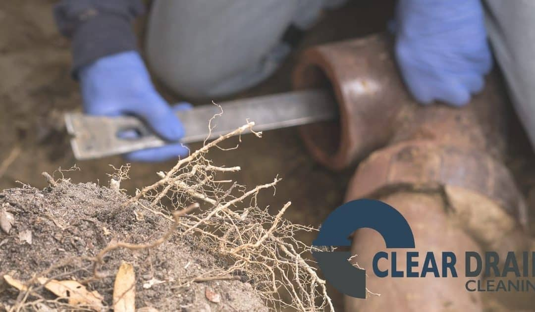 Image of man removing tree roots from underground pipe.